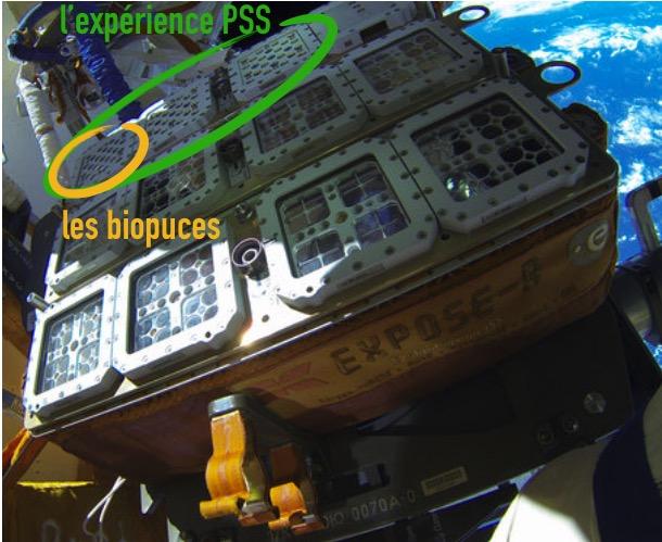 bpc_pss_biopuces2.jpg